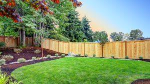 Budget Backyard Privacy Ideas